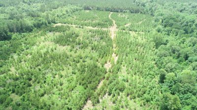 Caddo Parish Timberland property for sale