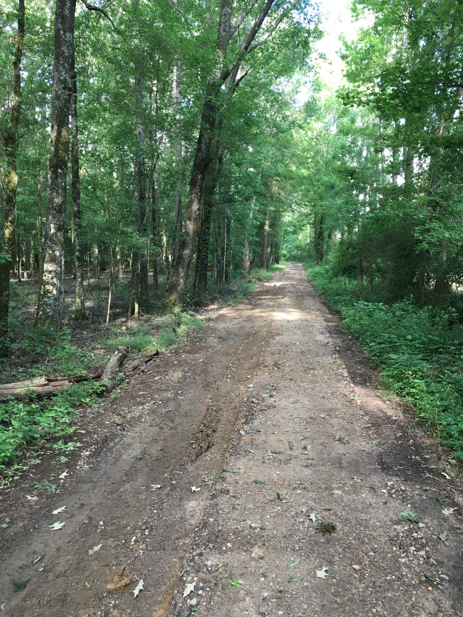 Doyline Homestead Tract, Webster Parish, 8 Acres +/-