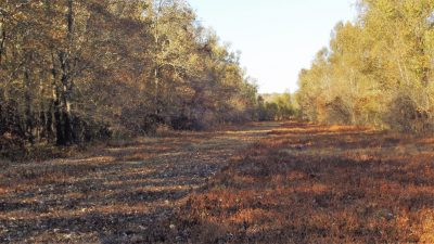 Agricultural land for sale in Bossier Parish
