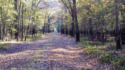 Palmetto Hunting Club – Two Equity Ownerships, Bossier Parish, 1,657 Acres +/- LABOSSBMJK1657