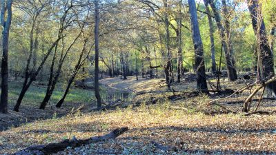 Down Hole Hunting Tract, Bossier Parish, 283 Acres +/-
