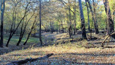 Bossier Parish Timberland for sale