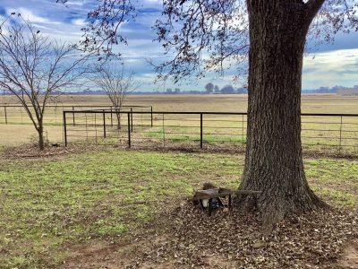 Country Estate of Plain Dealing, Bossier Parish, 75 Acres +/-