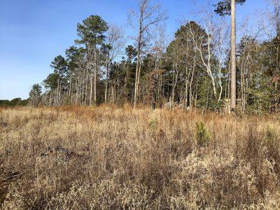 Claiborne Parish Timberland for sale
