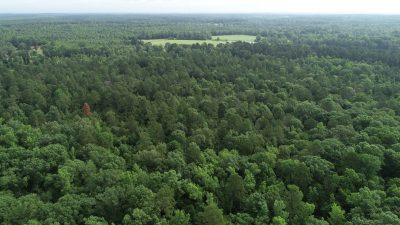 Timberland property for sale in Caddo Parish