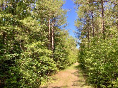 Highway 528 Tract, Bossier Parish, 61 Acres +/- LABOSSBM61