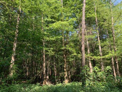 Recreational land for sale in Bienville Parish