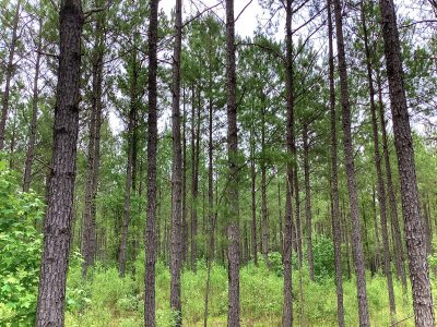 Recreational property for sale in Bienville Parish