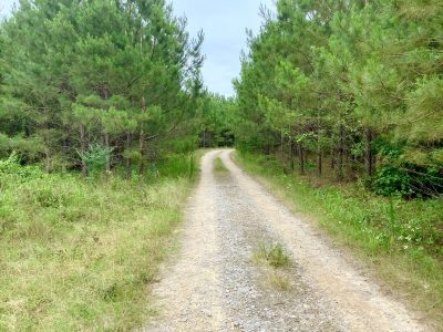 Bienville Parish Timberland for sale