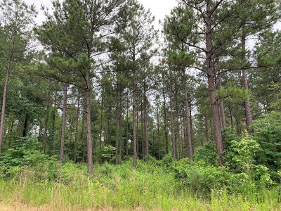 Timberland property for sale in Bienville Parish
