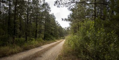 Hunting land for sale in Bienville Parish