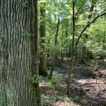 Bienville Parish Hunting land for sale