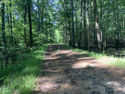 Bienville Parish Hunting property for sale