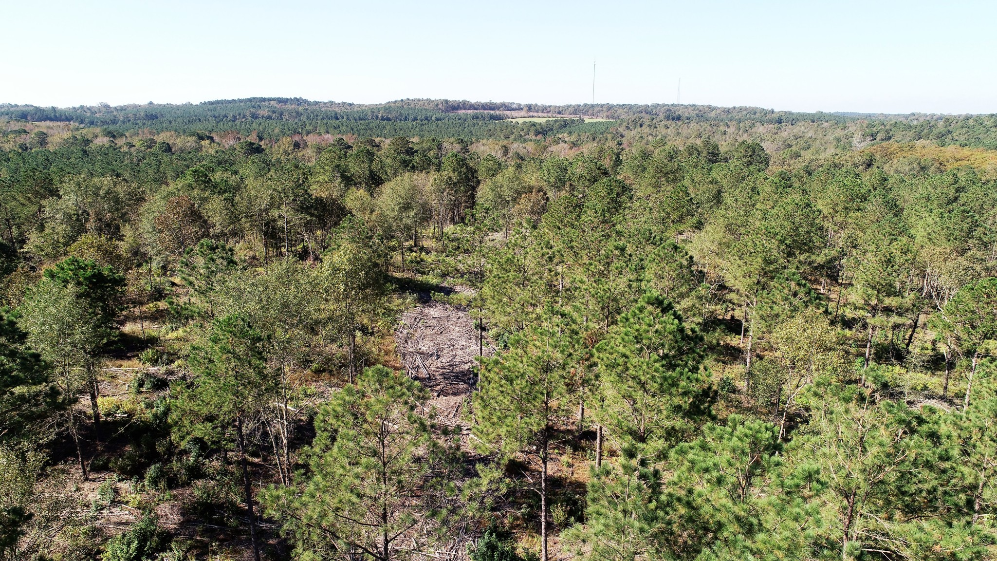 Caddo Parish Timberland for sale