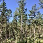 Caddo Parish Investment land for sale