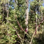 Caddo Parish Timberland property for sale