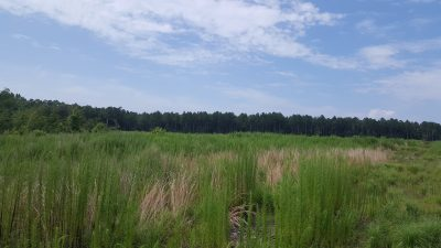 Recreational land for sale in Red River Parish