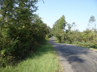 Bienville Parish Timberland property for sale