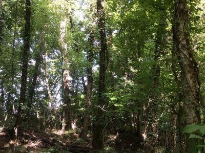 Timberland property for sale in Grant Parish
