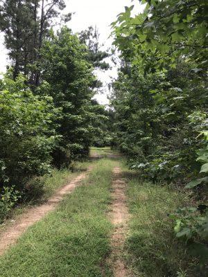 Timberland for sale in Sabine Parish