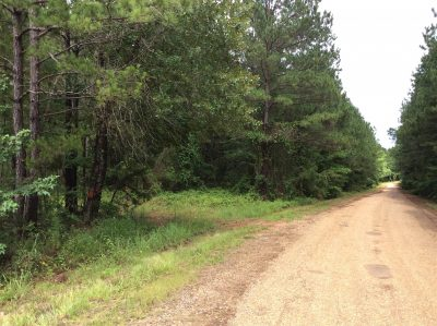 Timberland property for sale in Natchitoches Parish