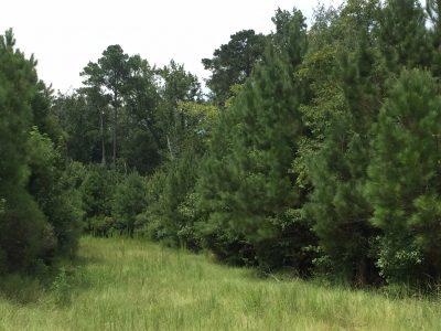 Jackson Parish Timberland property for sale
