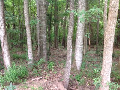 Timberland for sale in Bienville Parish
