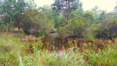 Bienville Parish Development land for sale
