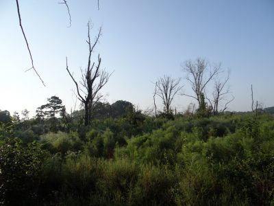 Agricultural land for sale in Bienville Parish