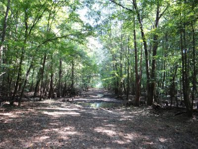 Investment property for sale in Bienville Parish