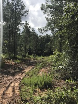 Timberland property for sale in Sabine Parish
