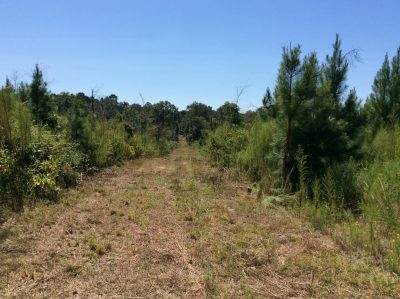 Winn Parish Investment land for sale