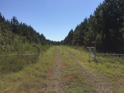 Lincoln Parish Timberland property for sale