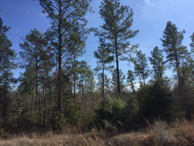 Jackson Parish Recreational property for sale
