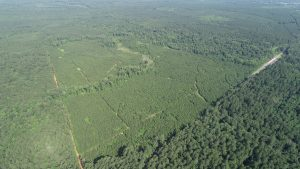 McClendon Estate Tract Sealed Bid, Webster Parish, 280 Acres +/-