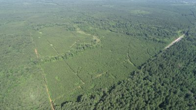Timberland for sale in Webster Parish