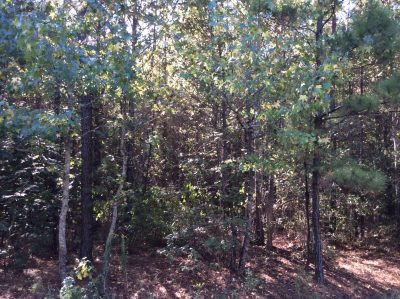 Grant Parish Recreational land for sale