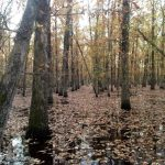 Timberland property for sale in Hempstead County