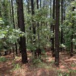 Development land for sale in Hot Spring County