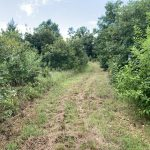 Hot Spring County Investment land for sale