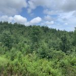 Hot Spring County Investment property for sale