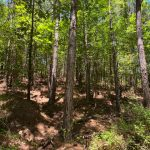 Investment property for sale in Hot Spring County