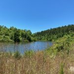 Hot Spring County Timberland for sale