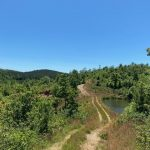 Timberland for sale in Hot Spring County