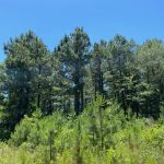 Recreational land for sale in Hot Spring County