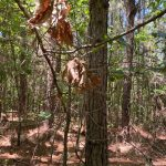 Development property for sale in Hot Spring County