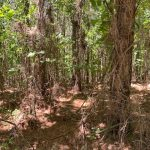 Hot Spring County Recreational property for sale