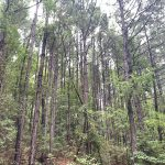 Hot Spring County Timberland property for sale