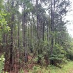 Timberland property for sale in Hot Spring County