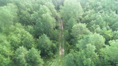 Boggy Creek Timber and Hunting Tract, Miller County, AR, 358 Acres +/-